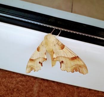Efectul fluture