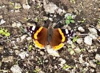 Fluture I.jpg